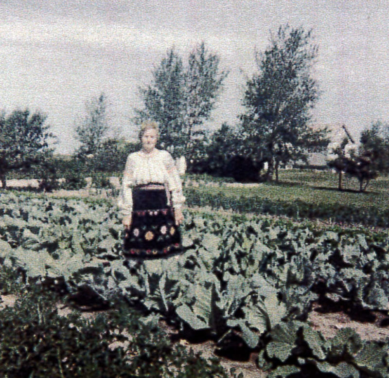 Maria Vulc, maker of the blouse, poses in traditional dress in a cabbage field in Saskatchewan, 1959.