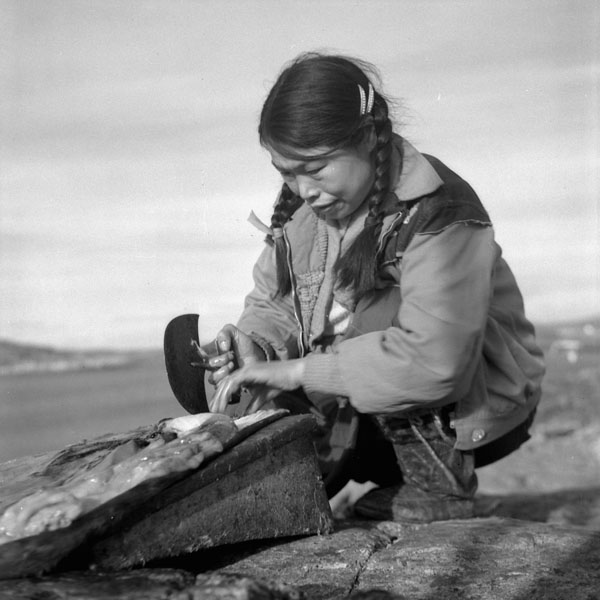 An Inuit woman, crouches on rocks while cleaning fat from an open sealskin with an ulu, a semi circle shaped knife.