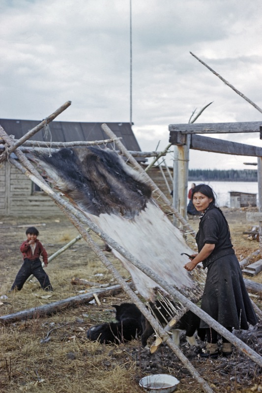 A woman works at cleaning a moose hide at a northern settlement, wood cabin and river in background, 1952.