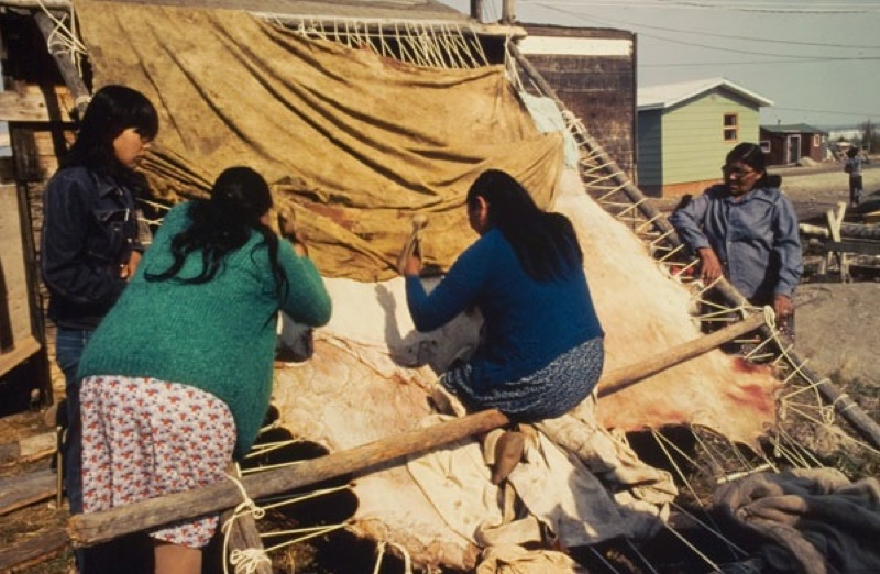 Two woman work at scraping a stretched moose hide while two others watch in a northern settlement, 1990.