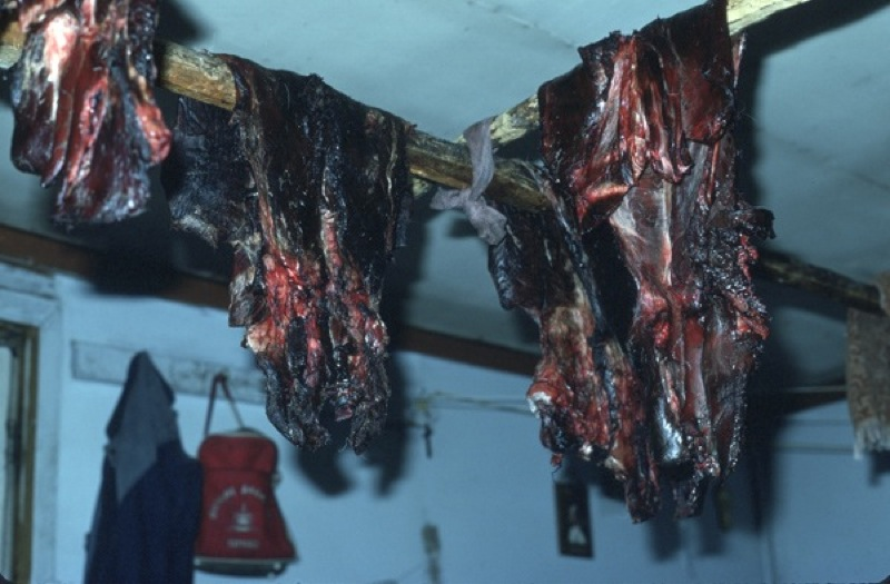 Caribou meat hangs drying from the rafters in a wooden cabin at Snare Lake, Northwest Territories, 1986.
