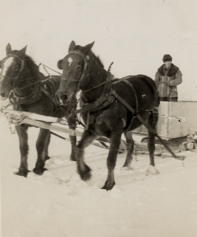 William Cowie Senior wearing his son's jacket and riding in a sled drawn by two dark horses.